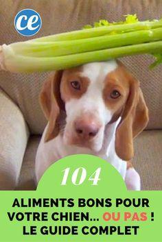 Quels Sont les Aliments Que Peut Manger un Chien ? Le Guide Pratique Pour 104 Aliments.