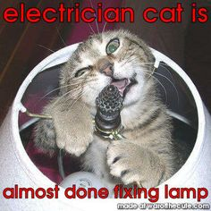 electrician cat is hard at work