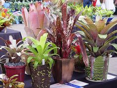 Fiesta16 by tanetahi, via Flickr