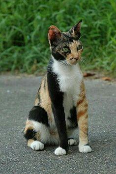 Cute cat was very unusual markings! Pinned