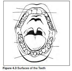 29 best danb images on pinterest dental assistant dental hygiene Certified Dental Assistant Resume Examples articles dental assistant