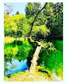 #Baum #Lake #Teich #Tree #Natur #Nature #Idylle #Idyll #gerrybuchacher #prettypictures #prettypictures.at Gerhard, River, Outdoor, Instagram, Pond, Tree Structure, Outdoors, Outdoor Living, Garden