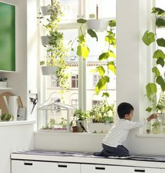 IKEA catalogue, any idea what the plant on the right is?