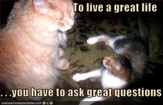 Ask a great question - get a great answer.