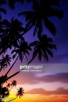 Stock Photo : Silhouettes of palm trees on sunset