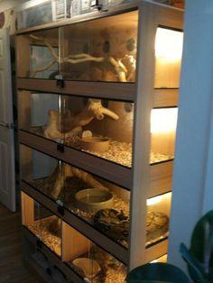 reptile vivariums - Google Search