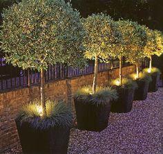 A.J.Barnes: Courtyard Design Winter Mission witte potten in het pad verlichting en bolboompjes in een grijsgroenblauwe kleur