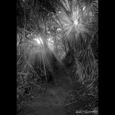 Path to #SecretBeach #Kilauea #kauai #Aloha  #bnw_captures #bnw_rose #Monochrome #Nikon #Nature #Paradise #Sky #Travel #Tropical #bnw #Beautiful #hawaii #wanderlust #clouds #blackandwhitephotography #beach ##bnw_society #Photography #instagram #photooftheday #natgeotravel #instagood #stayandwander #wonderful_places #hoboh #theeasywaytotravel