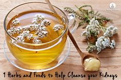 9 Foods and Herbs to Help Cleanse Your Kidneys!