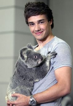 When a guy has a koala bear it makes him 10 times more attractive. To clear it up, I don't like but he has a freakin' koala! One Direction Photos, One Direction Harry Styles, Liam James, A Moment To Remember, Bear Photos, Cutest Thing Ever, Liam Payne, Liam 1d, I Love Him
