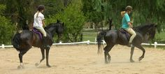 Riding lessons Riding Lessons, Horses, Animals, Animales, Animaux, Animal, Animais, Horse