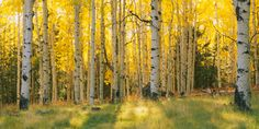 Trees Canvas Art Prints | Trees Panoramic Photos, Posters, & More | Great Big Canvas