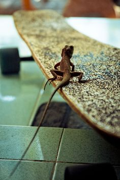 "500px / Photo ""lezard on the longboard"" by Scowl Broccoli"