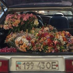 moodboard full of vaporewave and neon vibes Flower Aesthetic, Aesthetic Photo, Aesthetic Pictures, Aries Aesthetic, Beige Aesthetic, Retro Aesthetic, My Flower, Beautiful Flowers, Prettiest Flowers