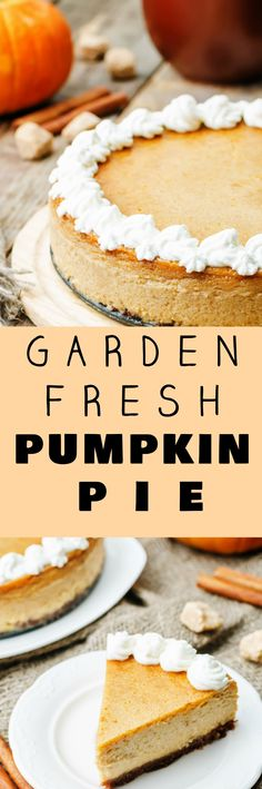 The best freshest Pumpkin Pie you can make! This homemade Garden Fresh Pumpkin Pie recipe uses fresh pumpkin puree made from scratch from your garden pumpkins. This homemade pie recipe is easy to make with condensed milk, a pie crust and plenty of Fall sp