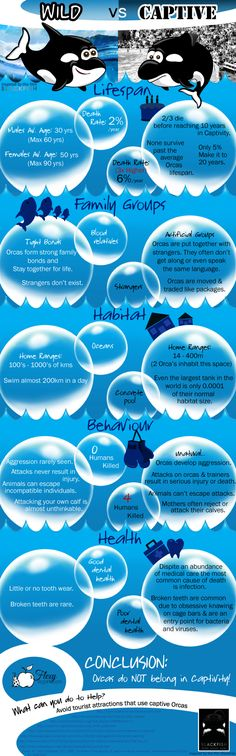 "Orcas in Captivity : A visual look at the difference between Orcas in the wild and Orcas in captivity, like the ones in Seaworld. Inspired by the movie Blackfish, this infographic raises the question ""Do Killer whales thrive in captivity? ""  > http://infographicsmania.com/orcas-in-captivity/?utm_source=Pinterest&utm_medium=ZAKKAS&utm_campaign=SNAP"