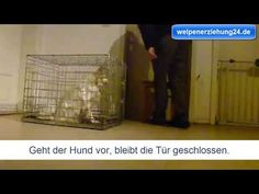 Die Hundebox hilft dir bei der Welpenerziehung, den Welpen schnell stubenrein zu… The dog crate will help you with the puppy education, get the puppies quickly housebroken and you can safely transport your puppy in the dog crate. Dog Crate, Crates, Home Appliances, Puppies, Education, Dogs, Pooch Workout, Poodle, Cats