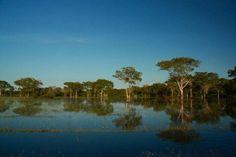 pantanal | Campo Grande, MS: Pantanal