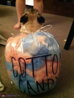 Cotton Candy Pug – Halloween Costume Contest via costumeworks The Effective Pictures We Offer You About candy costumes A quality picture can tell you many. Cotton Candy Halloween Costume, Pug Halloween Costumes, Pugs In Costume, Food Costumes, Candy Costumes, Pet Costumes, Fall Halloween, Pugs And Kisses, Costume Works