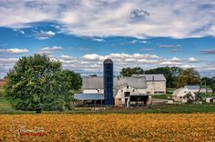 #barn #farm #rural #countrylife #greenacres #fallcolors #photography  This whole scene is just awesome.  The colors the cows the silo the farmhouse the fields the tree.  It's what I see in my head when I think of a farm.    Looks like such a quiet and peaceful place.  I know farms are hard work but i can imagine how much slower life moves there.  (Or at least it does in my mind).  Get up early but  you go to sleep early too dealing with the weather and the animals and the fields all must be…