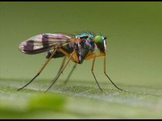 Ερήμην Παράσταση - Η Μύγα