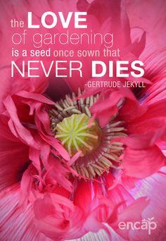 So very true...#garden #flowers