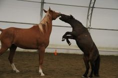 5 Harsh Realities of Training The Dominant Horse