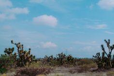 #palmeras #desierto #slp #sanluispotosi #desiertoslp #desiertosanluispotosi #amigos #qro #depaseo #conociendo #cables #luz #cielo #paisaje