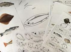 lesmateriaal voor de kleuterklas over vissen in de Noordzee, de vissersboot, visserij, visafslag en viswinkel - kleurplaten, knippen, knutselen, kenniskaarten