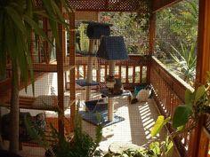 Kingdom of Pet: Buying an Outdoor Cat Enclosure Diy Cat Enclosure, Outdoor Cat Enclosure, Pet Enclosures, Outdoor Cat Run, Cat Cages, Cat Sitter, Cat Garden, Cat Room, Cat Decor