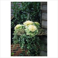 Winter hanging basket with ornamental Kale 'Northern Lights', Hedera - Ivy and Calluna vulgaris - Heather - GAP Photos - Specialising in horticultural photography