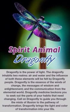 Information on Dragonfly as spirit animal guide= i remember. The dragonfly. Dragonfly Symbolism, Dragonfly Quotes, Dragonfly Art, Dragonfly Meaning Spiritual, Dragonfly Jewelry, Watercolor Dragonfly Tattoo, Dragonfly Images, Dragonfly Tattoo Design, Watercolor Tattoos