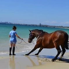 """Girl: """"oh come on, it's not that bad!"""" Horse: But it's cold!! And there's sharks and jellyfish!"""""""