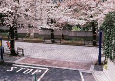 downtown shinjuku - by miyuklm