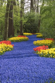 """Known as the """"most beautiful spring garden in the world,""""Keukenhof explodes with color every spring when 7 million tulip bulbs bloom almost simultaneously. The phenomenononly lasts from March until May, so plan your trip accordingly.  See more beautiful gardens »"""