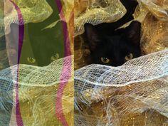Black Cat by frankgiugliano | Remby