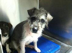 TO BE DESTROYED 02/21/17 ***REASON: SPACE*** 34519409 located in El Paso, TX