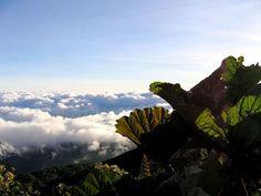 Janvier 2013 Costa Rica Mer de nuage sur le volcan Turrialba