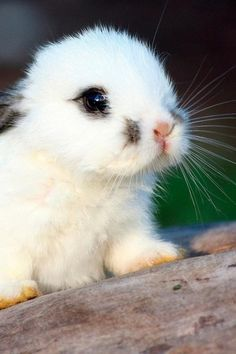 The cutest baby bunny you ever did see