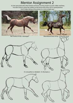 How to draw a horse: - # drawings - Drawings/Cartoons/Disney/Pixar/Idk - Zeichnen Horse Drawings, Art Drawings Sketches, Animal Drawings, Drawing Techniques, Drawing Tips, Horse Drawing Tutorial, Arte Equina, Horse Anatomy, Animal Anatomy