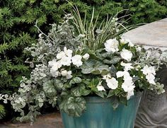 This combination features New Guinea impatiens, a type of impatiens that is not affected by the disease. Featured plants: Infinity White New Guinea impatiens, variegated sweet flag (Acorus gramineus), white licorice plant (Helichrysum petiolare) and Green spice heuchera. Photos: Courtesy of Proven Winners