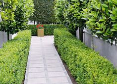 Narrow gardens - Better Homes & Gardens Magazine - Yahoo!7 Lifestyle