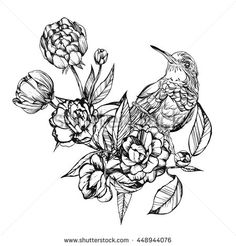 Colibri.Detailed drawing of a bird.Vector illustration isolated on white background,in flowers.handmade