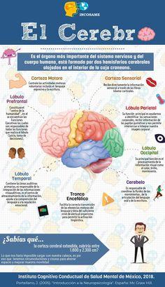 Medicine Notes, Medicine Student, Nervous System Anatomy, Ap Psych, Medical Anatomy, Brain Gym, Med Student, Interesting Information, Always Learning
