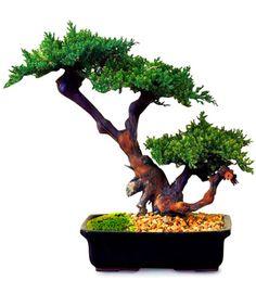 fetish videoer nedlasting bonsai