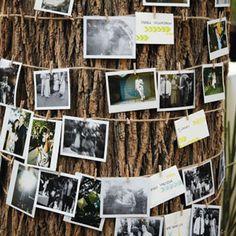 photos sur les arbres