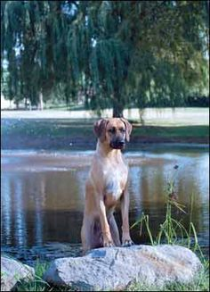Considering a Holistic Approach to Your Dog's Health? - Whole Dog Journal Article