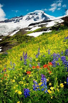 Mount Baker, Washington. USA