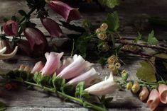 Sarah R, Beaurust Flowers https://flic.kr/p/ofL5Gs | currants2