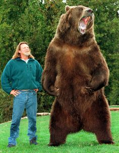 """Bart the bear, who was trained by Doug and Lynn Seus, is an Alaskan Kodiak Bear, born in 1977 and died in 2000 at the age of 23. He appeared in several movies: Grizzly, Day of the animals, Growing up Grizzly and Legends of the Fall. He grew to 9'6"""" and weighed 1500 pounds"""